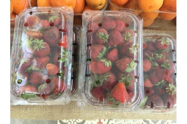 Φράουλες Τσακίρη